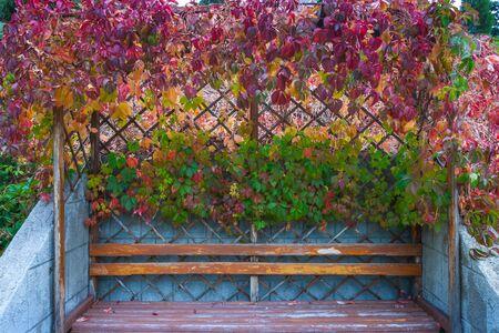 wild grape arbor in autumn Фото со стока
