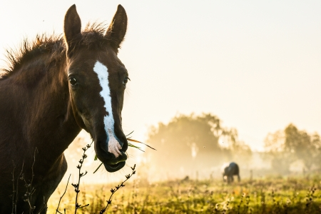 Foal with a mouth full of grass photo