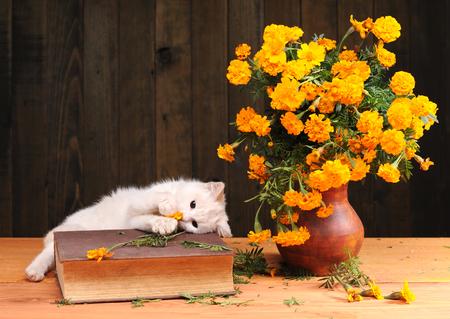 gato jugando: gato blanco juega con las flores Foto de archivo