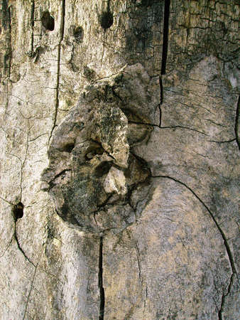 Dried out barkless stump