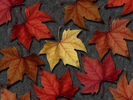 sycamore leaf: A composition of several autumnal coloured leaves on a digital background