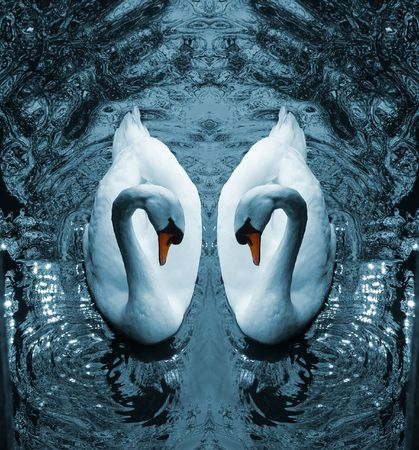 A digital composition of two Mute Swans (Cygnus Olor)