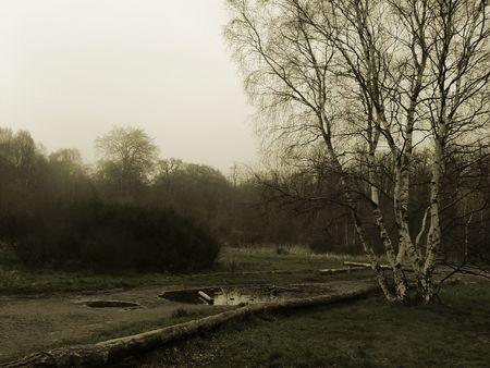 copse: A sepia coloured landscape of a misty park during winter