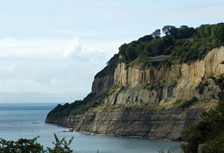 A tree lined cliff showing many layers or strata of rock jutting into the sea