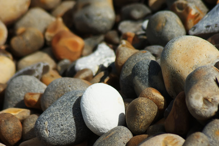 A white pebble in the midst of a group of brown and grey pebbles