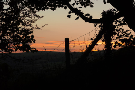 A tree and wire fence with fence post silhouetted against the evening sky Stock Photo