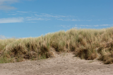 Grassy sand dune taken from low angle with blue sky above