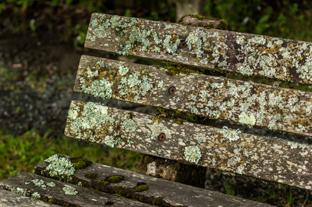 The back of an old park bench covered in different mosses and lichens