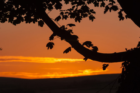 A  tree branch and leaves silhouetted against a red sky at sunset Stock Photo