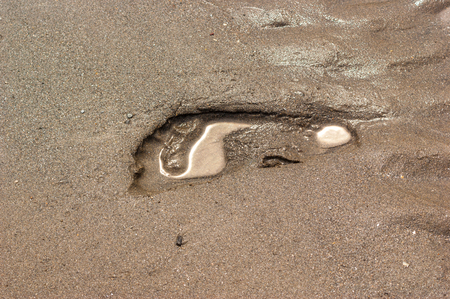 A footprint in wet sand