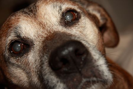 hard love: dog with eyes full of love Stock Photo
