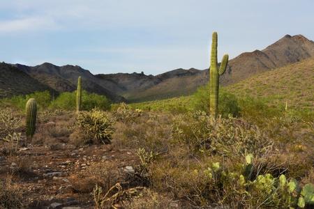 Desert Landscape 스톡 콘텐츠
