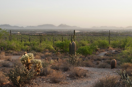 scottsdale: Desert View of Scottsdale Stock Photo