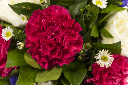 red  carnation: red carnation, white aster, close up