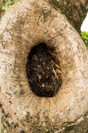 cavity: oval shape tree hollow, tree cavity, close up