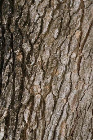 Tree bark Texture Background Pattern