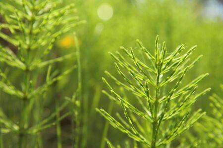 Green plant shrubs, backlit. Imagens