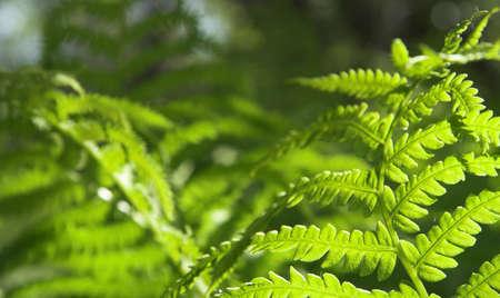 백라이트 펀 잎