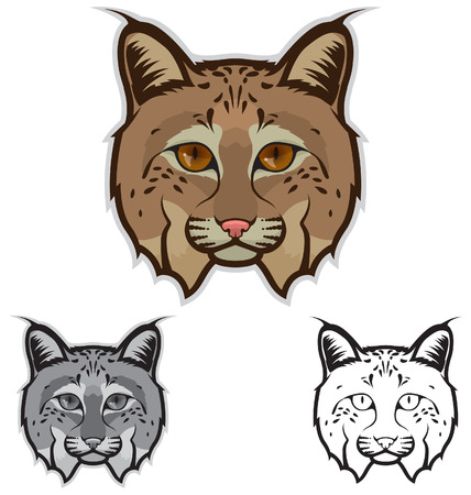 lynx: Bobcat Face Illustration