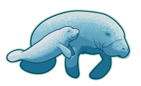 250 manatee cliparts stock vector and royalty free manatee rh 123rf com Cartoon Manatee Cartoon Manatee