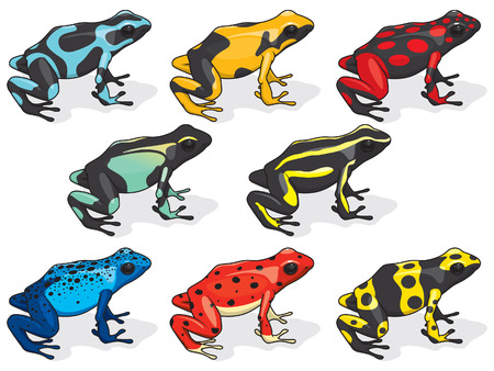 poison dart frogs: Poison Dart Frogs Illustration