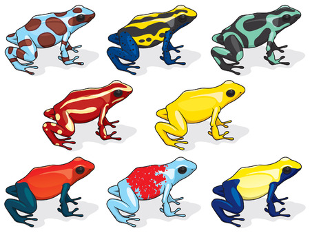 yellow and black poison dart frog: Poison Dart Frogs Illustration