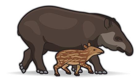 South American Tapirs