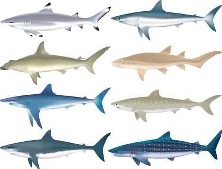 scavenging: Sharks