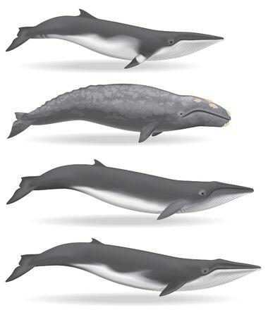 クジラ 写真素材 - 30394259