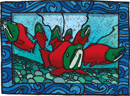 scratchboard: Spawning Salmon