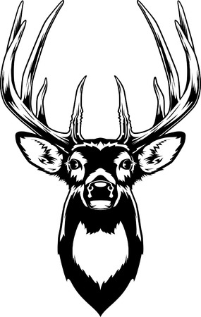 655 whitetail deer stock vector illustration and royalty free rh 123rf com white tailed deer clip art Deer Clip Art