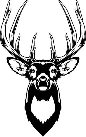 Whitetail 사슴 머리