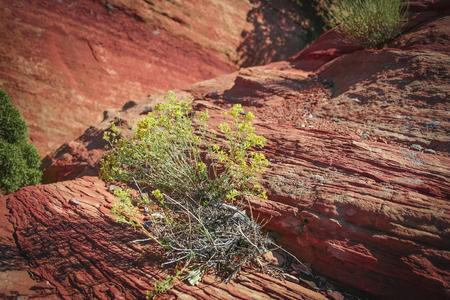 Desert Weed