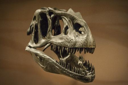 Dinosaur Skull 版權商用圖片 - 30985044
