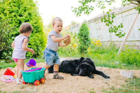sandpit: black dog looks at the children playing in the sandbox