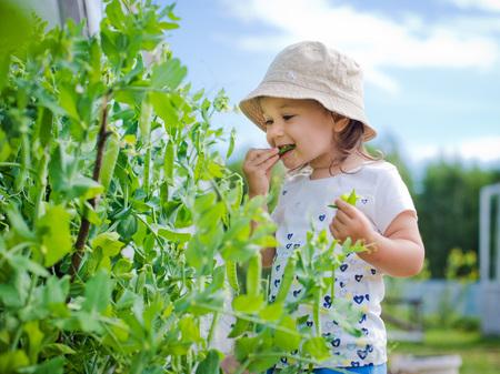 Child in the garden gathers eating peas Foto de archivo