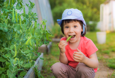 Little girl sitting eating fresh green peas on the garden in the garden. Useful baby food. Organic natural products. Childrens vacation in the village. Stock Photo