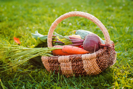 basket of organic vegetables grown in their own hands in the greenhouse. Without pesticides Against the background of a rustic house in the open air. Bio Healthy diet. Harvesting farmers harvest.