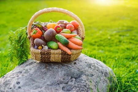 Basket full of fresh ecological vegetables on the grass at sunset on the background of a rustic wooden house. Organic food grown on your farm in a greenhouse without pesticides.
