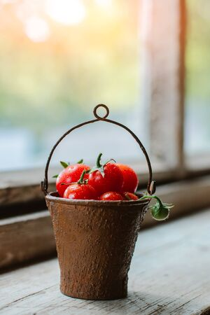 Cherry tomatoes in a decorative rusty old bucket on the background of an old wooden window. Beautiful still life of grape tomatoes are small in contrast the light with water drops. Standard-Bild - 129167668