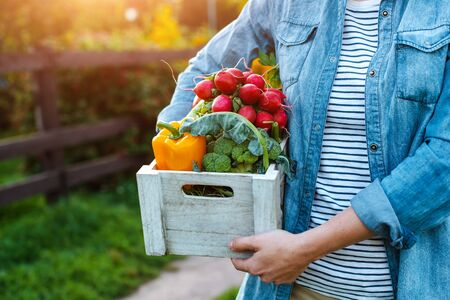 A box of fresh vegetables in the hands of a woman farmer close-up horizontally. the concept of vegetarianism, healthy eating, autumn harvest, agriculture, without nitrates Standard-Bild - 129168257