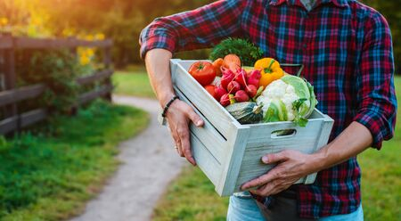 wooden box with fresh farm vegetables close up in mens hands outdoors. vegetarianism, healthy eating, autumn harvest, farming, without nitrates