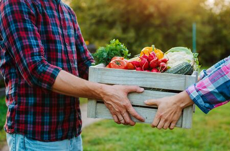 wooden box with farm vegetables in the hands of men and women, close-up. vegetarianism, healthy eating, autumn harvest, farming, without nitrates
