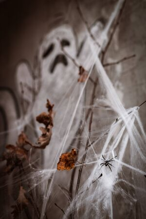 Background decorations for Halloween celebration. tree branches in the web on the background of a Ghost Stock Photo