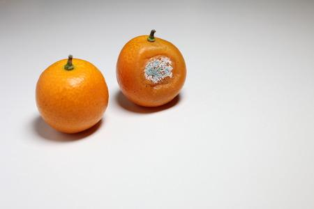 moldy: Moldy fruit kumquat