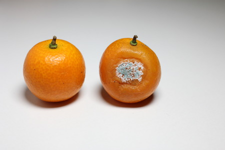moldy: Moldy fruit kumquat