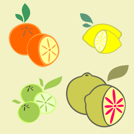 citrus fruits: Citrus Fruits Varieties Illustration