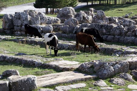 ancient pass: Cows and ruins Stock Photo
