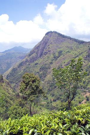 Ella Rock and tea plantation near Ella, Sri Lanka Stock Photo - 1612787
