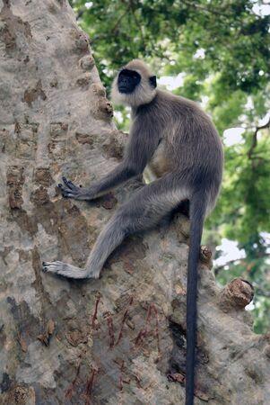 Big tree in Kataragama, Sri Lanka                  Stock Photo - 1834656